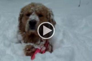 Hilário: compilação mostra cães vendo neve pela primeira vez e suas reações