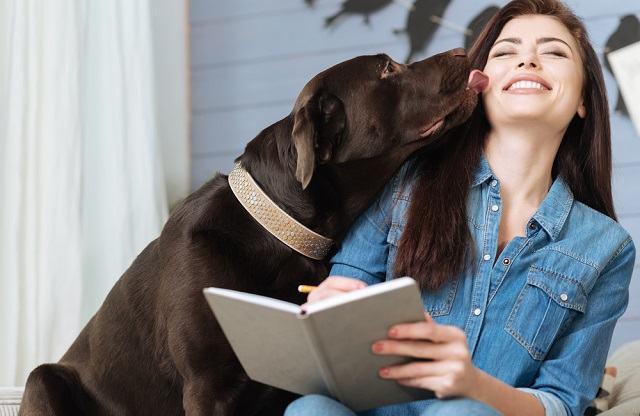Lambida do cachorro pode conter bactérias perigosas para à saúde humana