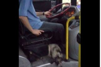 Motorista deixa cães entrarem em ônibus para se protegerem de chuva