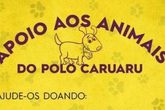 ONG caruaruense realizará bazar solidário para ajudar cães de rua