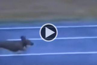 Para rir: cãozinho trapaceiro faz de tudo para ganhar corrida
