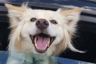 8 cães que estão extremamente felizes em ver seus tutores