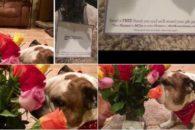 Tutor envia flores para seu cão em recuperação e confunde sua esposa