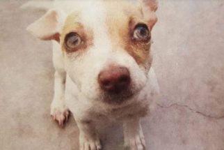 'Viciado' em drogas, cão é resgatado e consegue uma segunda chance