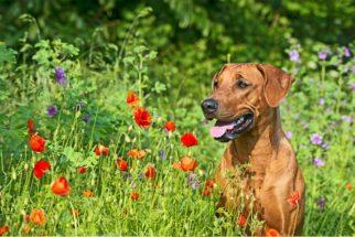 Proteja seu bichinho! 10 alergias possíveis que seu cão pode ter