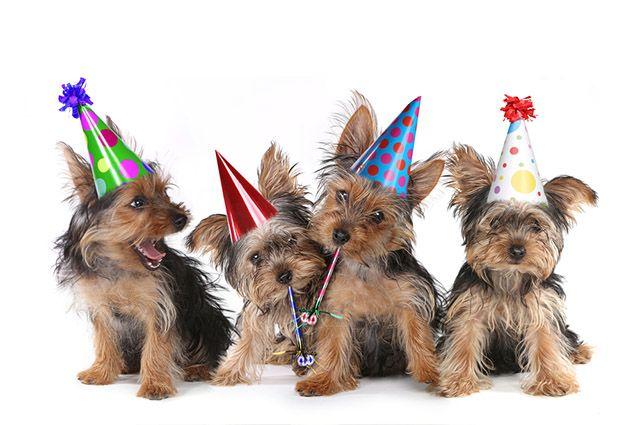 14 de março: o Dia dos Animais