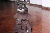 Frei Bigodes: conheça o cãozinho que foi adotado por monges franciscanos