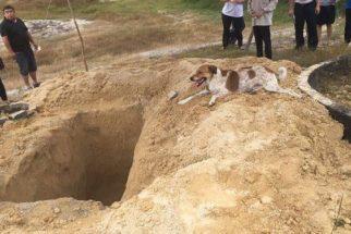 Cão corre mais de três quilômetros para acompanhar caixão de tutora