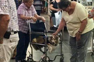 Mulher divide cadeira de rodas com a sua cadelinha idosa