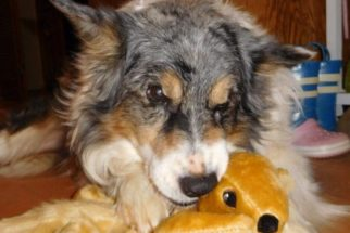 Após anos tentando 'capturar' um esquilo, cãozinho ganha um de sua tutora