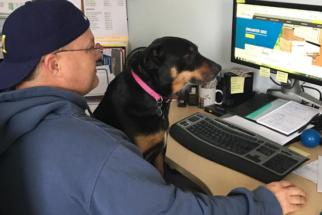 Tutor que trabalha em casa elege seu cão o melhor funcionário todos os meses