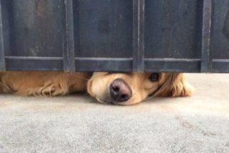 Amizade entre garota e cão que mora perto de sua escola comove a web