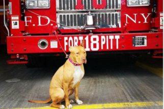 Abandonada, cadela é resgatada e entra para corpo de bombeiros