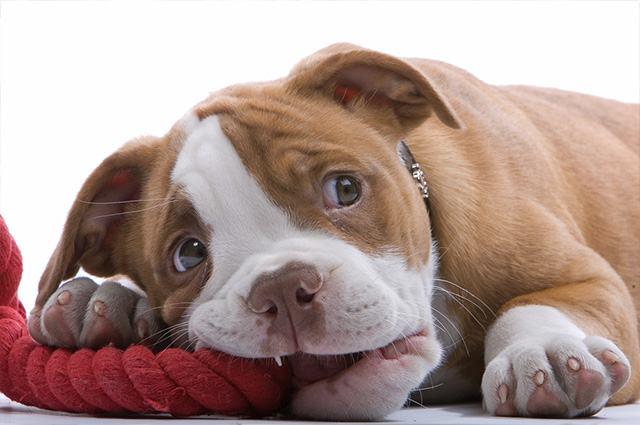 Algumas coisas importantes que você precisa ensinar ao seu cão nos primeiros dias