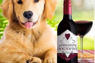 Após sucesso de cerveja canina, empresa cria vinho para cães