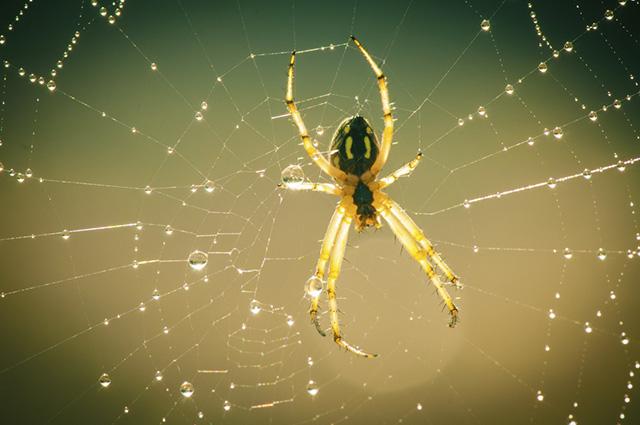 Faça os primeiros socorros enquanto se dirige ao veterinário com o cão picado por uma aranha