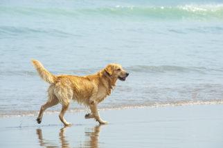 Queimaduras de água-viva em cachorros. O que fazer e como tratar?