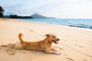 Cães precisam de cuidados também depois do verão
