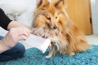 Quedas de cães: Saiba como agir e tratar estes acidentes