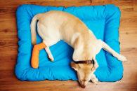 Como tratar queimaduras por fricção em cães