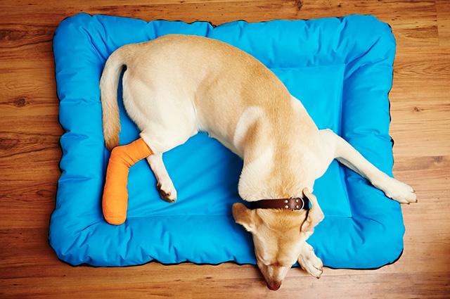 Para tratar queimaduras por fricção em cães é preciso do acompanhamento de um profissional