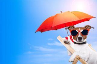 Cães podem se queimar com o calor? Tire essa dúvida e proteja seu pet