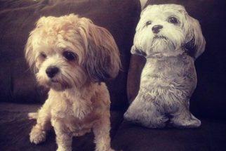 Veja a fofura entre cães e almofadas parecidas com eles