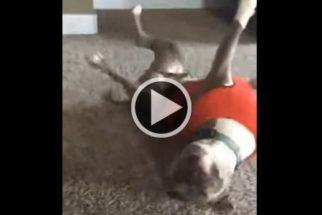 Cãozinho tenta imitar pirueta de garota e fracassa de maneira hilária