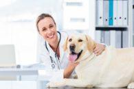 Como escolher um bom veterinário para levar o meu animal de estimação?