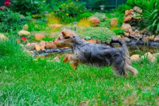 Cosméticos naturais capazes de proteger o seu animal contra agentes externos