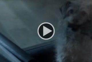 Em paródia de filme, cãozinho busca vingança após dono ser assassinado