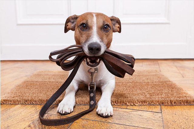 Esses são os itens que todo novo tutor de cão precisa ter
