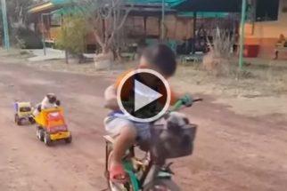 Fofura: garoto improvisa 'trenzinho' para brincar com filhotes de pug