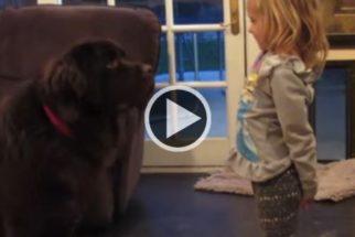 Garota brincando com seu cão grandão é a coisa mais fofa que você vai ver hoje
