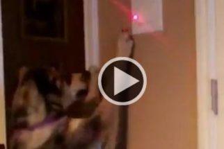 Garoto inova ensinando um truque de tutores preguiçosos para cão