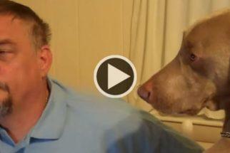 Hilário: cãozinho se recusa a ser 'ignorado' por tutor e reclama