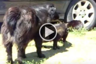 Inesperado: vídeo mostra cães separando briga entre gatos