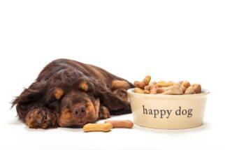 Mitos e verdades sobre a alimentação dos cães filhotes