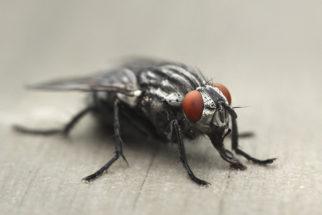 Saiba como tratar picadas de moscas em cães
