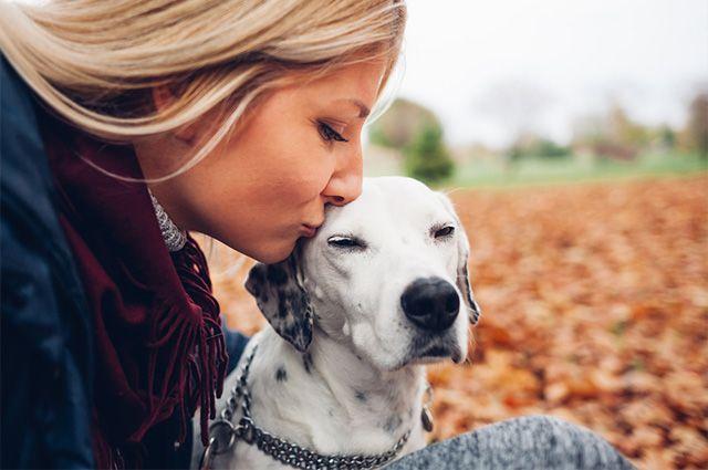 Motivos que você precisava saber para adotar um cãozinho ainda hoje