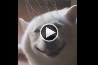 Para rir: cãozinho não se contém ao receber massagem na cabeça