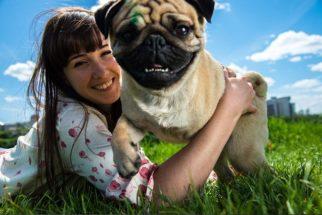 Quais doenças podemos transmitir para os cães. Descubra
