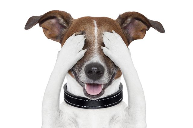 Assim como os humanos, os cães também podem ter terçol