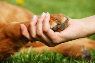 Veja como perceber e tratar unhas encravadas no seu cão