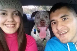 Mesmo após divorcio, rapaz envia cartões de aniversário para cão de ex-mulher
