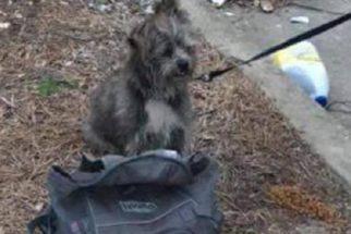 Cão é abandonado ao lado de lixeira com bilhete muito triste