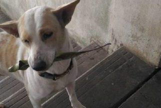 Emocionante: cadela de rua sempre leva presentes para mulher que a alimenta