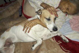 Com doença terminal, tutora tenta encontrar novo lar para seus cães