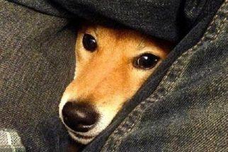 12 'snaps' bobos sobre cães que vão animar o seu dia