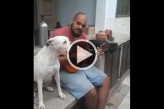 Cadelinha talentosa adora cantar um samba com seu tutor